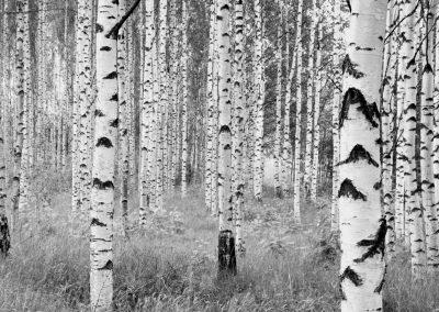 xxl4-023_woods_ma - copia